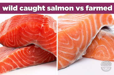 wild caught salmon vs farm raised WEB
